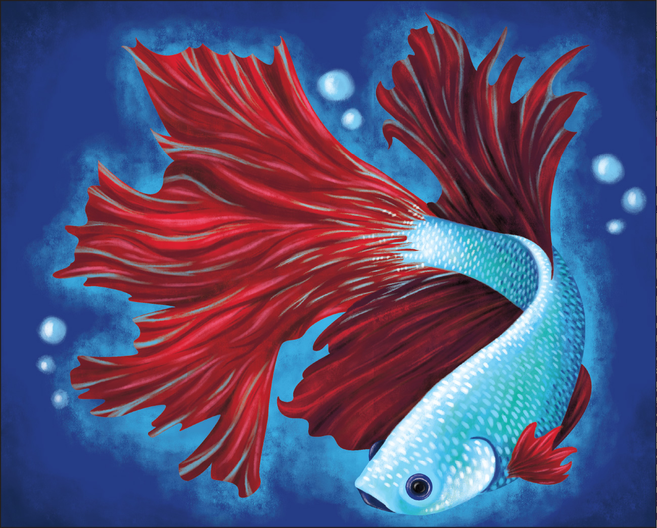 Small Betta Fish Images Gallery >> Live Betta Fish Petco. Why Its ...
