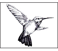 Advanced Charcoal: Playful Hummingbird