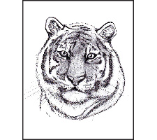 Advanced Graphite Pencil: Proud Tiger