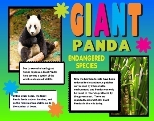 Giant Panda on How To Do A Great Science Fair Project And Board