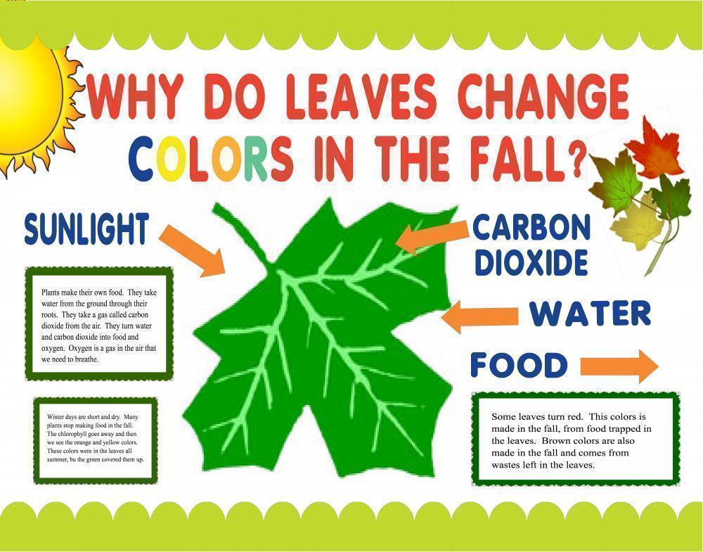 Make a Science Fair Project   Poster Ideas  Why do Leaves