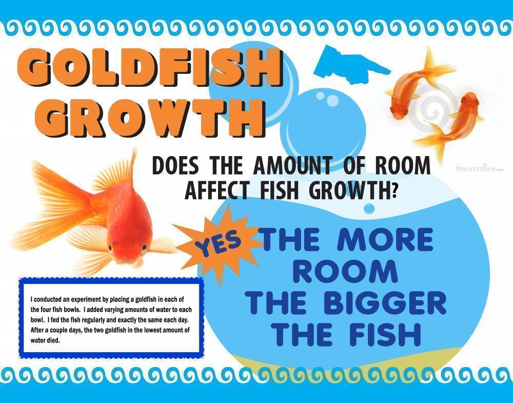 make a science fair project about gold fish bowl size