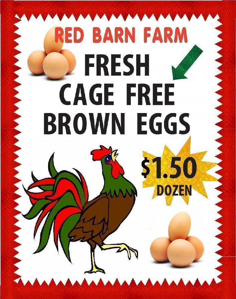 Create a Poster About Farm Fresh Eggs| Business Poster Ideas