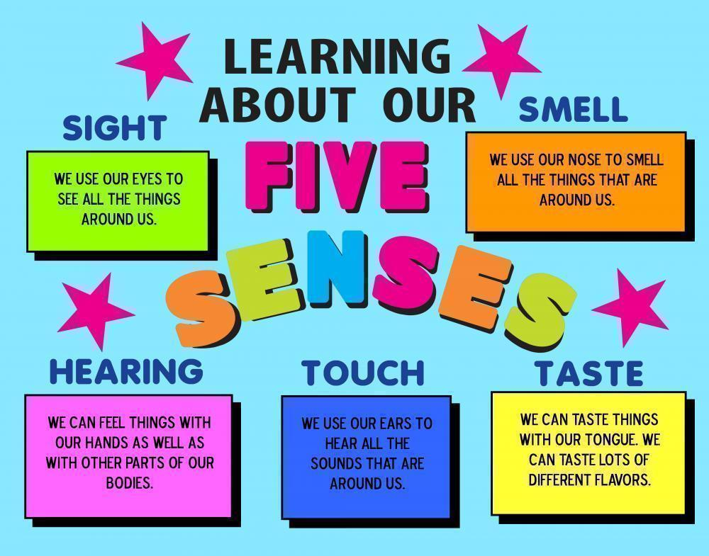 Make a science fair project about the five senses quot learn how the