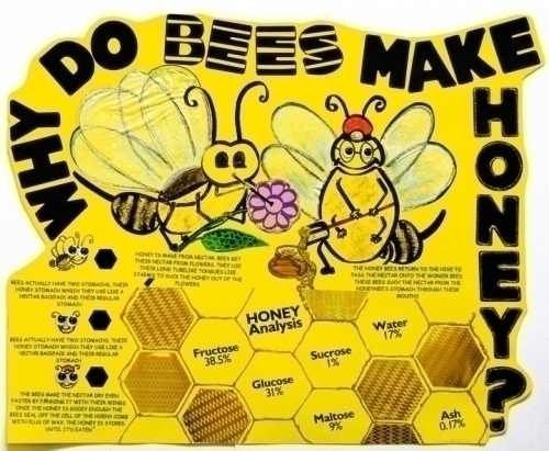 Why Do Bees Make Honey on How To Do A Great Science Fair Project And Board