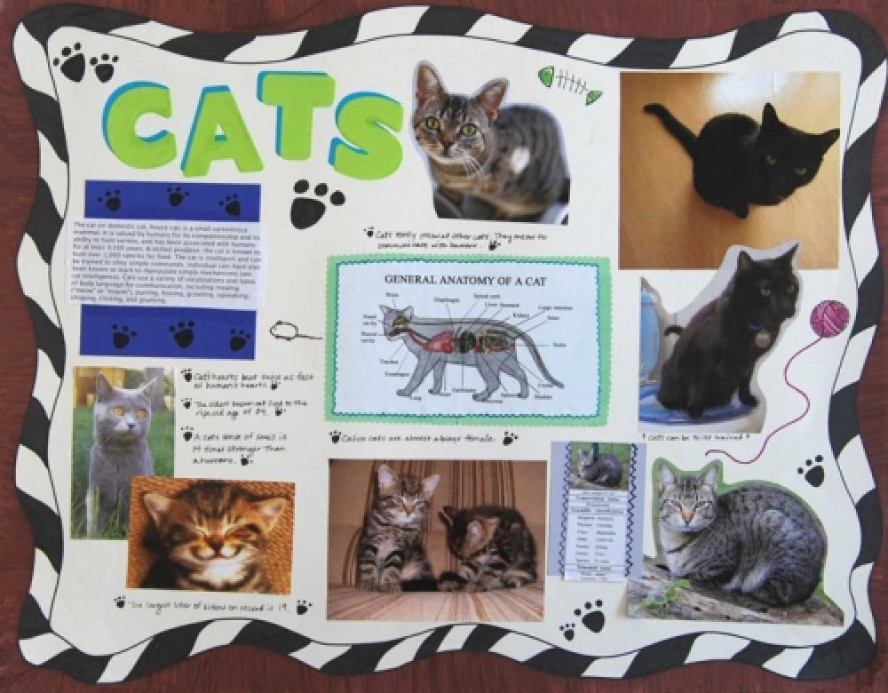 make a science fair project about different types of cat